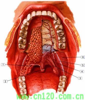 懂牙科或口腔科的来看看->[休闲养生网(xxju.net ...